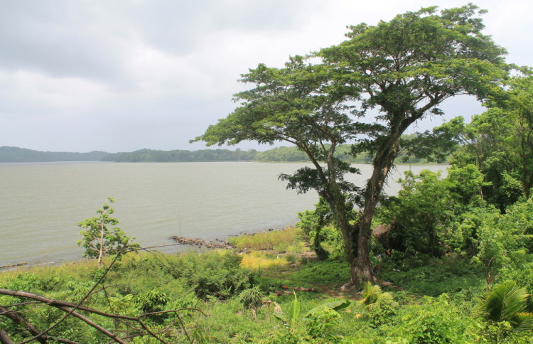 Solentiname Islands, Nicaragua: Trees on Mancarron