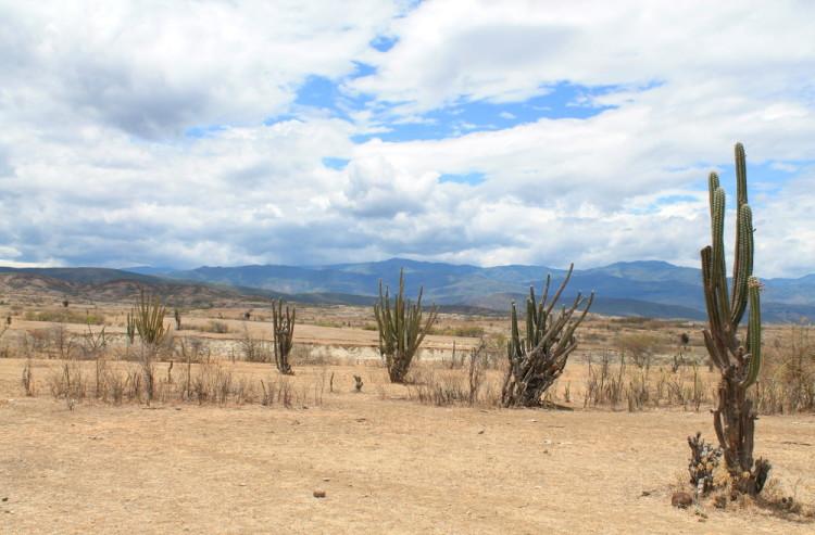 tatacoa-desert-cactus-colombia