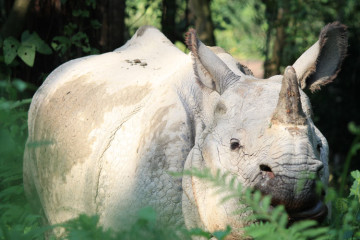 Searching for rhinos in Chitwan National Park, Nepal