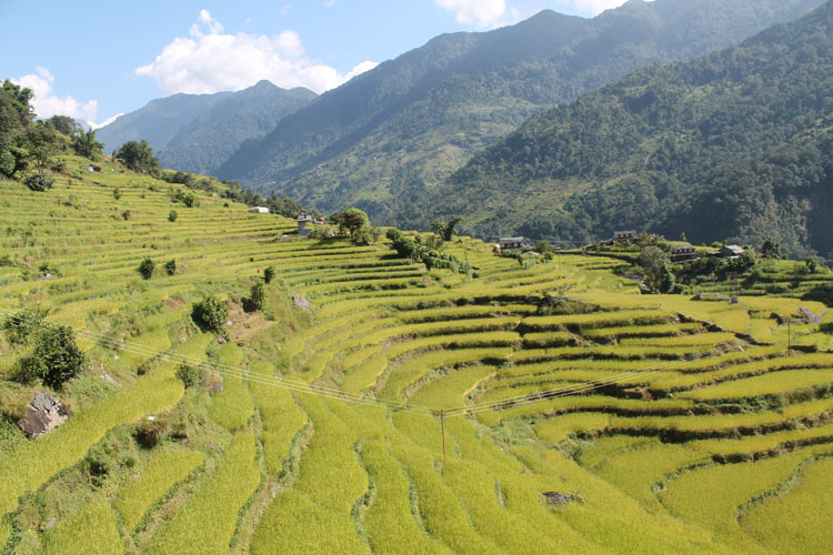 The 4 day Poon Hill Trek, Nepal : Farms close to the end of the trek