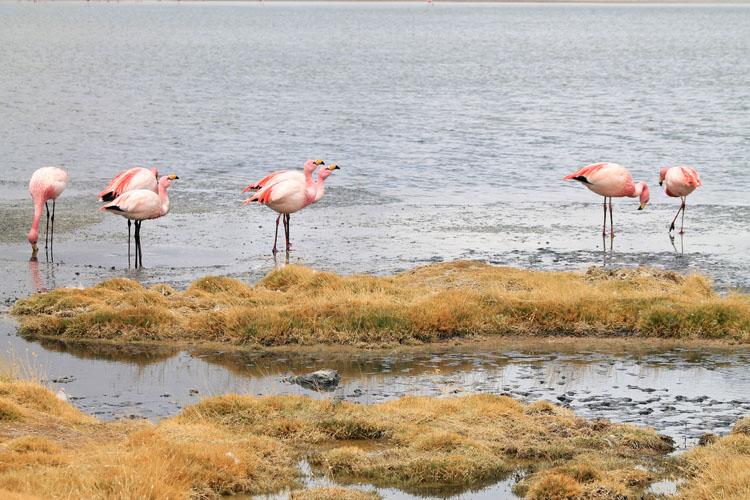 flamingos-laguna-hedionda