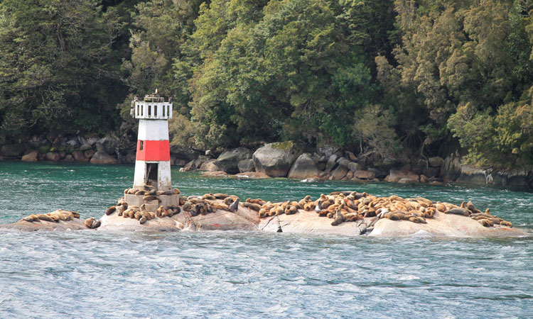 A budget cruise through Patagonia on the Navimag ferry from Puerto Montt to Puerto Natales: Sea lions