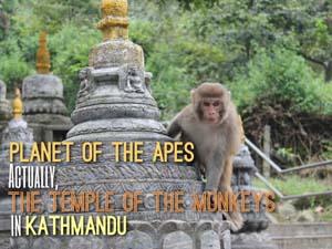 monkey-temple-sb