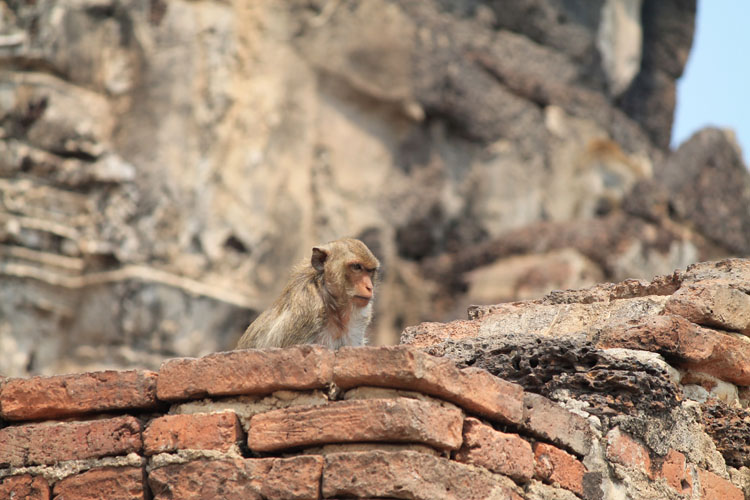 Exploring the ruins in Lopburi, Thailand -- the Monkey Temple