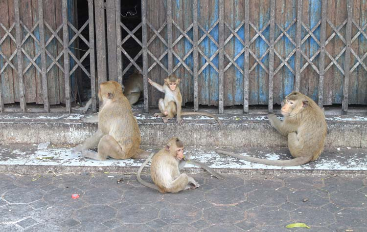 Exploring the ruins in Lopburi, Thailand -- monkeys on the streets
