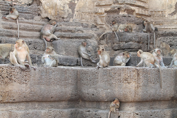 Exploring the ruins in Lopburi, Thailand -- relaxing monkeys