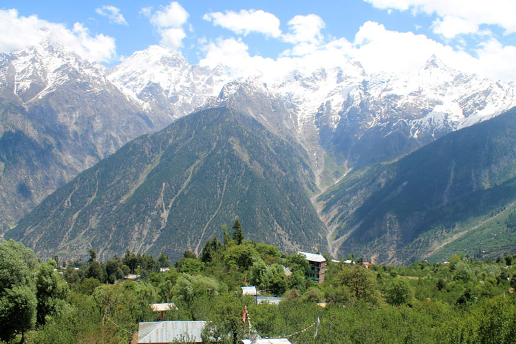 apple-orchards-kalpa-india