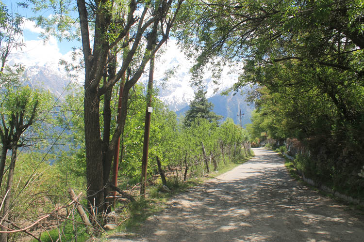 hiking-road-kalpa-india