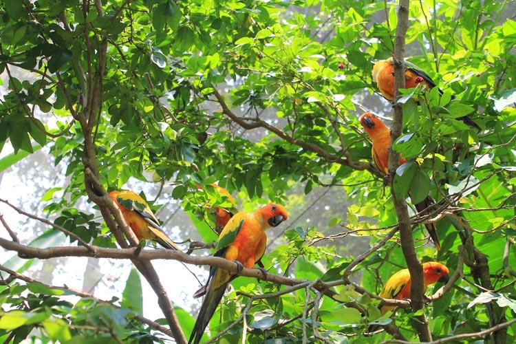 jurong-bird-park