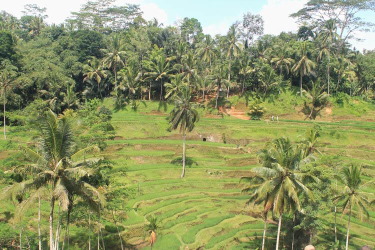 tegallalang-rice-terraces-bali