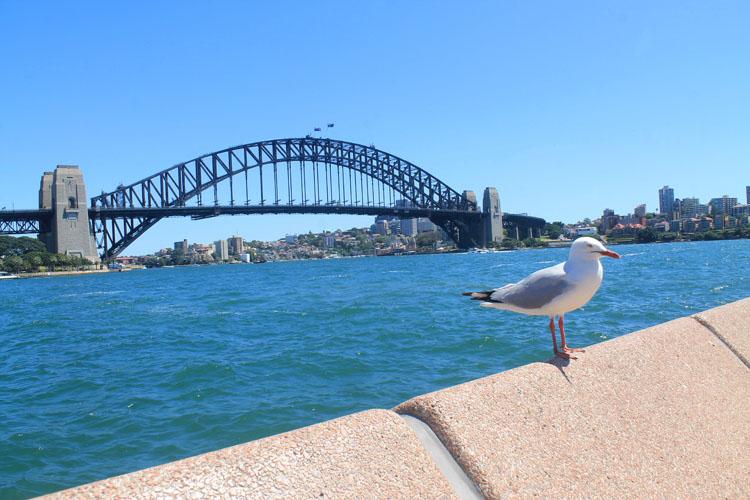 A day in Sydney, Australia -- The Sydney Harbour Bridge