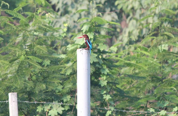Kanchanaburi travel guide, Thailand -- a colourful bird
