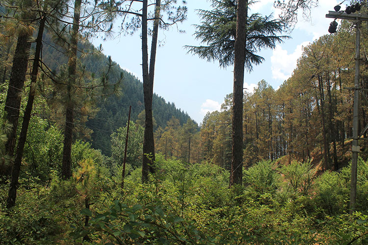Old Manali VS Kasol VS Dharamkot: Which Hippy Tourist Town in India is Right for You? | Jonistravelling