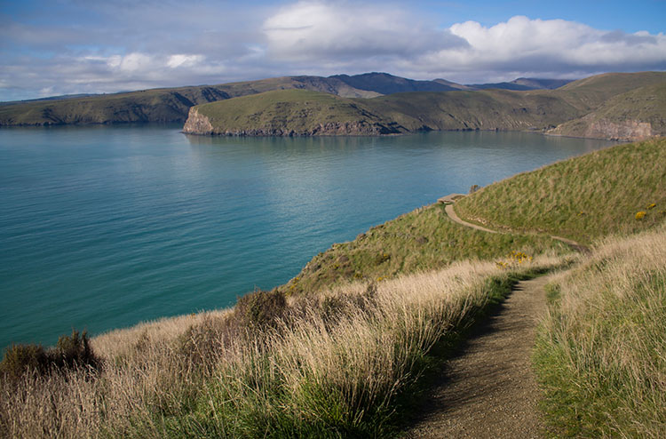 Things to do in Christchurch, New Zealand -- Taylor's Mistake to Godley Head hike