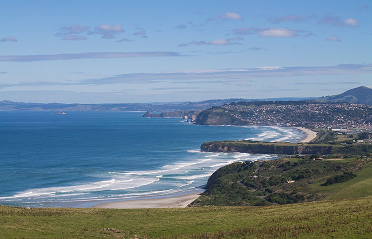 Last week's walk -- beautiful view above Dunedin's suburban beaches