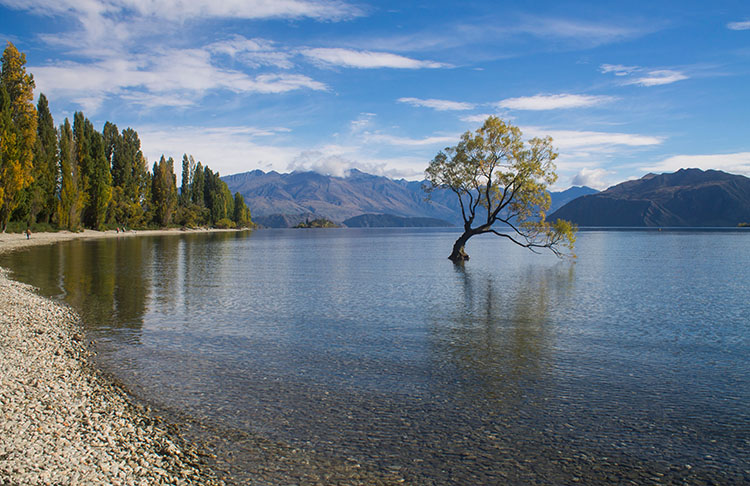 Two week New Zealand itinerary: That Wanaka Tree