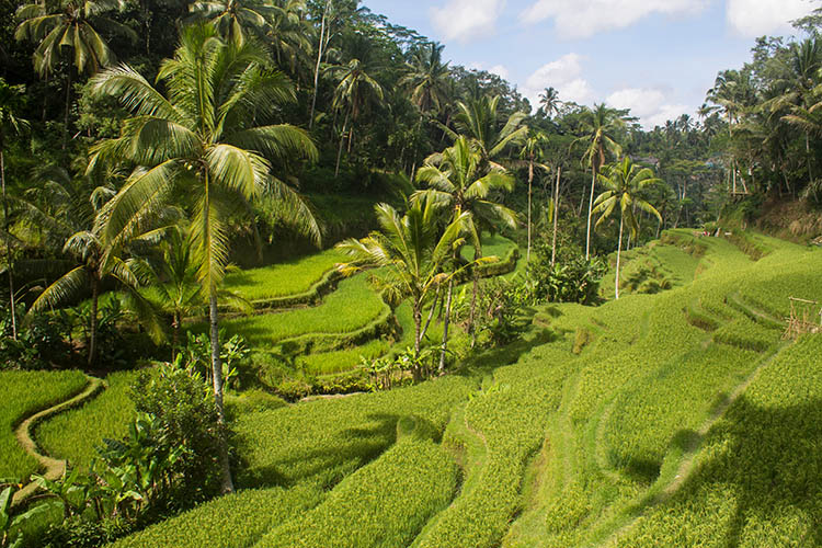The best rice terraces in Bali, Indonesia - Tegalalang, Ubud
