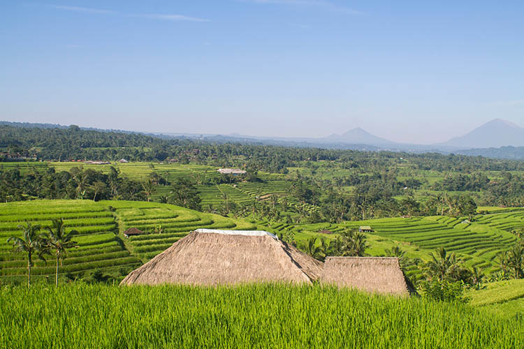 The best rice terraces in Bali, Indonesia - Jatiluwih