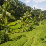 Bali Itinerary: Two Weeks on the Island of the Gods