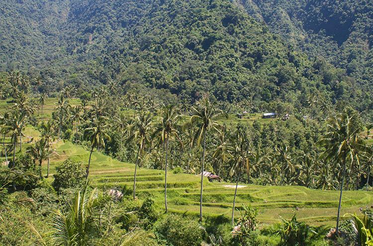 The best rice terraces in Bali, Indonesia - Sekumpul Falls