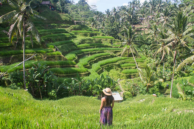 Where Are The Best Rice Terraces In Bali Tegalalang Vs Jatiluwih