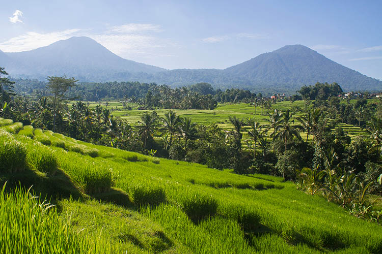 Things to do in Munduk, Bali -- a day trip to Jatiluwih rice terraces