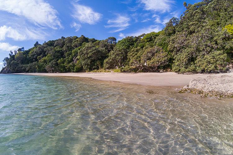 Swimming at Whale Bay, Tutukaka Coast, Northland, New Zealand