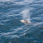 A Dolphin Spotting Tour in Jervis Bay, Australia