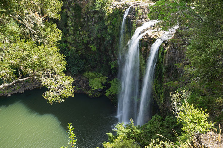 Whangarei Falls, Northland, New Zealand