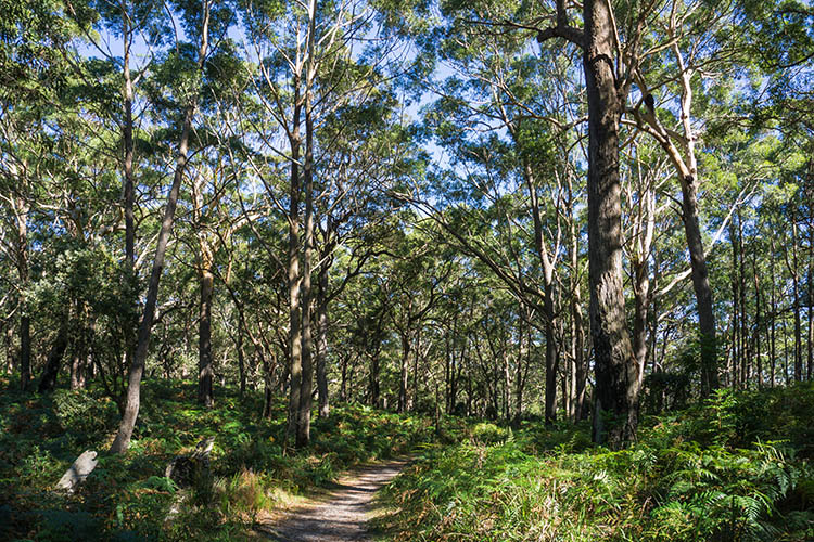 A bush walk at Green Patch, Jervis Bay