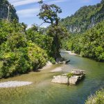 Places to See on the West Coast, New Zealand: A Fun Road Trip Itinerary