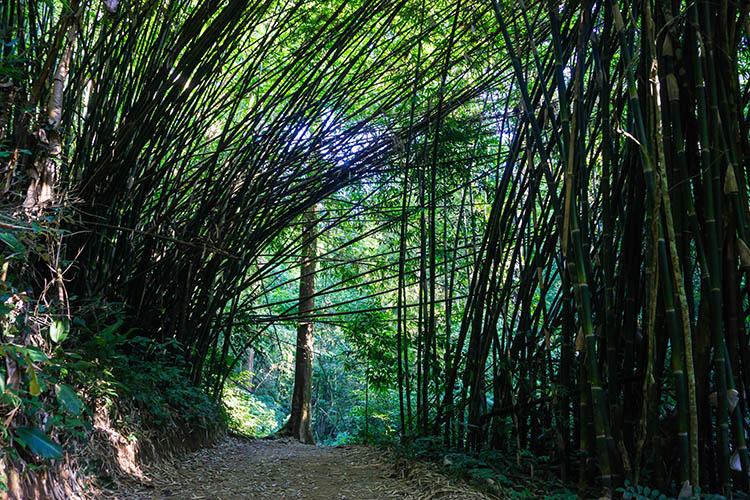 Parque forestal Khun Korn, Chiang Rai, Tailandia