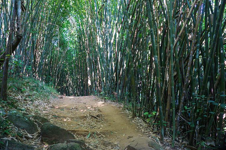 Un bosque de bambú cerca de Chiang Rai, Tailandia
